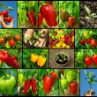 Peppers collection — Stock Photo