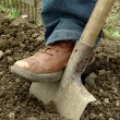 Cultivation — Stock Photo #3350474