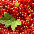 Redcurrants — Stock Photo #38782471