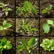 Seedlings set — Stock Photo