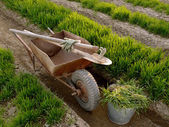 Wheelbarrow with tools in a spring garden — Stock Photo