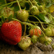 Strawberries — Stock Photo #47604145