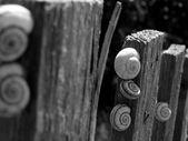 Snails — Stock Photo