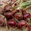Red onions bunch — Stock Photo #51084665