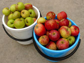 Two buckets full of apples — Stock Photo