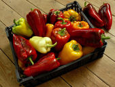 Home grown peppers — Stock Photo