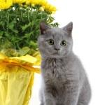 小猫和黄色的花朵 — 图库照片