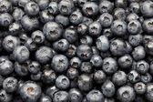 Blueberries background — Stock Photo