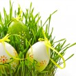 Easter eggs in a green grass — Stock Photo