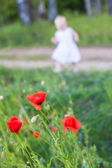 Wild poppies and little child — Stock Photo