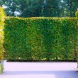 Garden bushes — Stockfoto