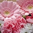 Stock Photo: Pink and white flowers closeup