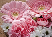 Pink and white flowers closeup — Stock Photo