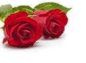 Rode rozen — Stockfoto
