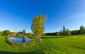 Letní krajina s jezerem — Stock fotografie