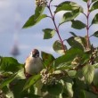 Bird on a branch — Stock Video