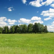 Summer meadow, blue sky, timelapse — Vídeo Stock