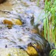 Forest stream — Stock Video #22530461