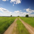 Road through the meadow — Stock Video #22530511