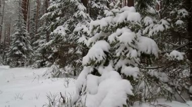 Kış orman, kaymak — Stok video