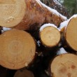 Sawn timber — Stock Video #22644039