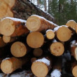 Stock Video: Sawn timber