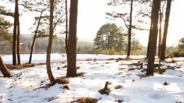 Kış orman — Stok video