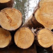 Sawn timber - Stock Photo