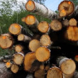 Sawn timber — Stock Video #22683307