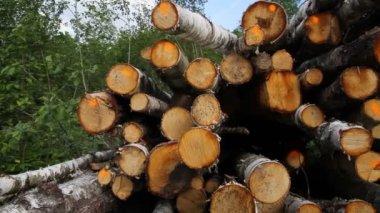 Sawn timber — Stock Video