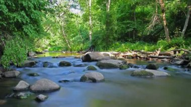 Forest River, motion blur, timelapse — Stock Video