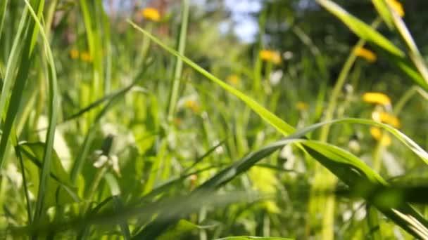 Pasto verde con — Vídeo de stock
