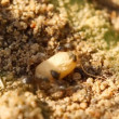 Ants and egg, close-up — Wideo stockowe