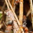 Ants in an anthill -  