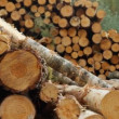 Sawn timber — Stock Video