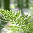 Video Stock: Fern