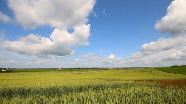 Wheat field, timelapse — Stock Video