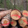 Sawn timber — Stock Video #22777220