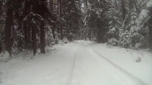 Camino de invierno en el bosque — Vídeo de stock