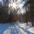 Winter forest and the sun — Stock Video #22822948