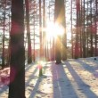 Stock Video: Winter forest and the sun