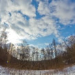 Winter forest, timelapse — Stock Video