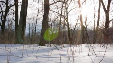 Winter forest, timelapse — Stock Video