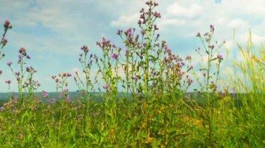 Widok ze wzgórza lasu timelapse — Wideo stockowe