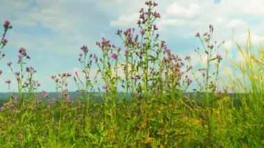Vista desde la colina del bosque timelapse — Vídeo de Stock
