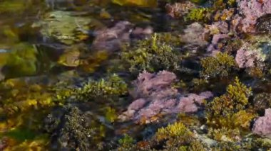 Marine plants in the surf — Stock Video