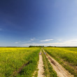 Road rape field — Stock Photo #3285441