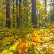 Stock Video: Autumn forest, timelapse panorama