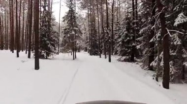 Winter-forstweg — Stockvideo