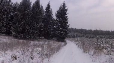 Winter forest road — Stock Video